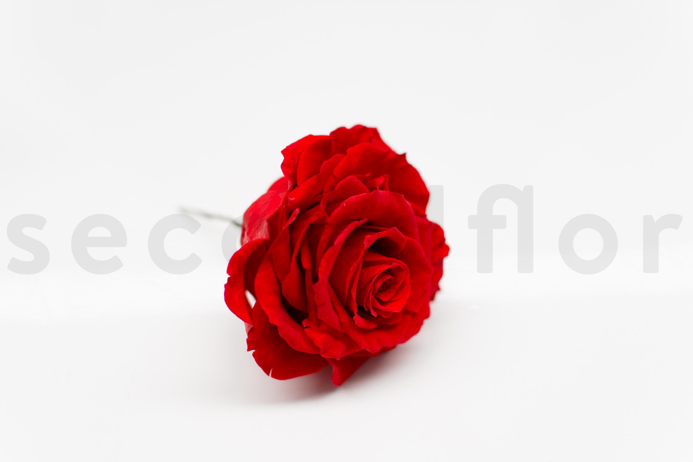 SN-DIY-Rose en cube-step10-9975